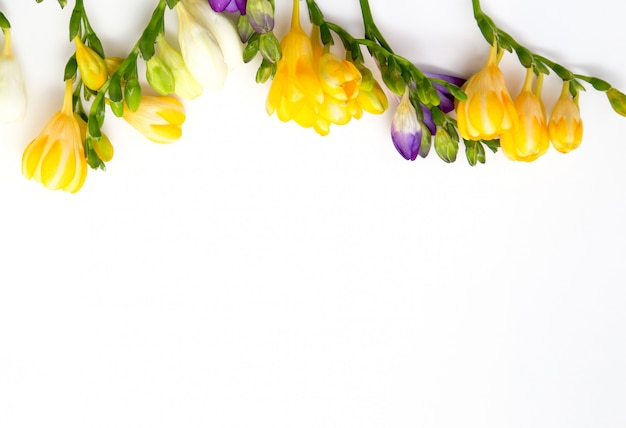 Beautiful spring freesia flowers on a white background.