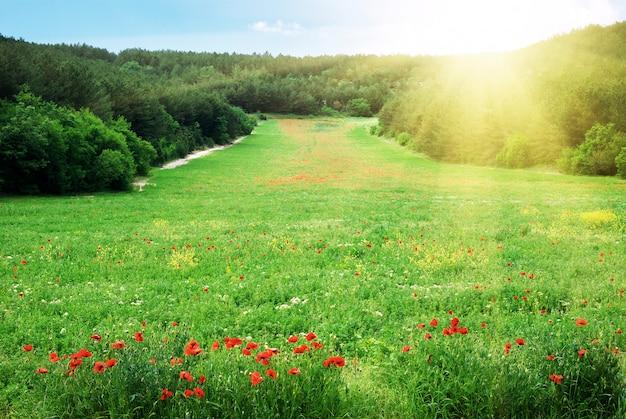 Красивый весенний зеленый луг в горах