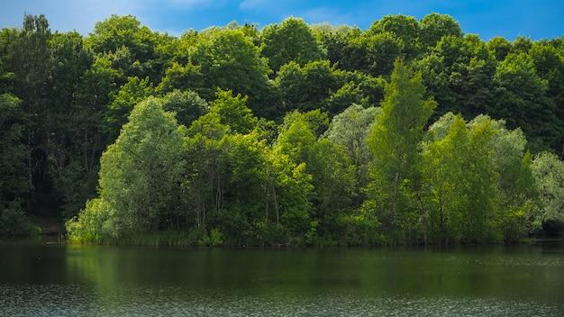 나무와 물에 반사의 해안선과 아름 다운 봄 풍경.