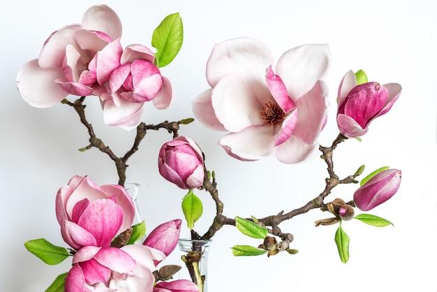 Beautiful spring magnolia flowers.