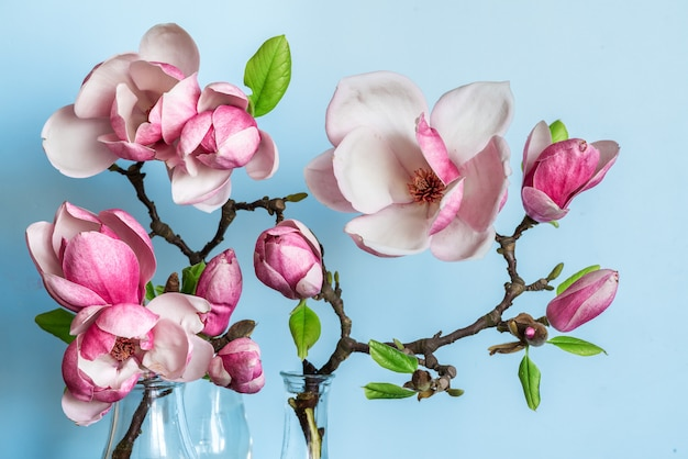 Beautiful spring magnolia flowers