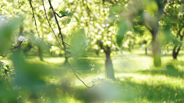 Beautiful spring park - bright green colors in sunlight