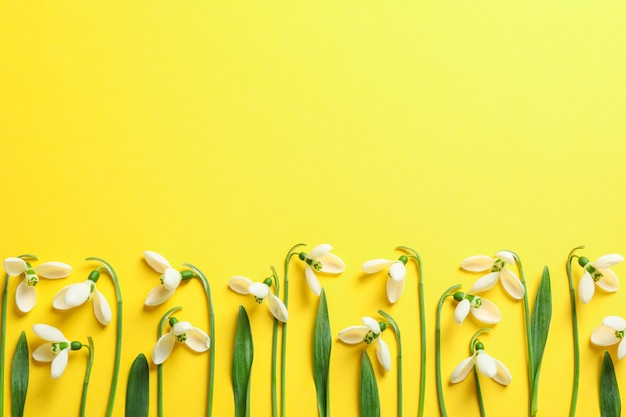 Beautiful spring snowdrop flowers on color background, space for text