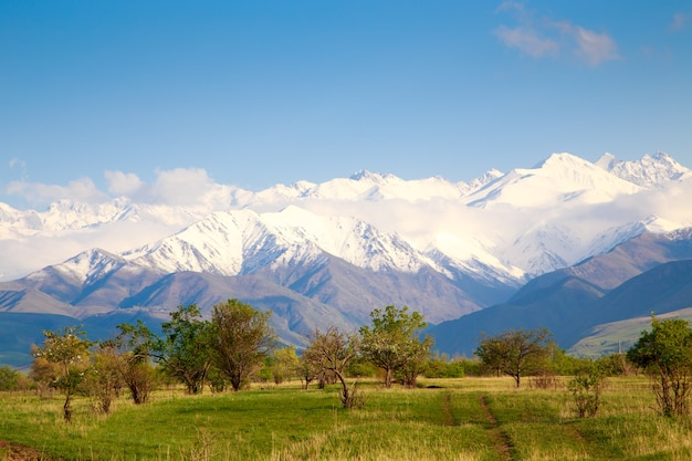 Beautiful spring and summer landscape. lush green hills, high snowy mountains. spring blooming herbs. blooming trees. blue sky and white clouds.