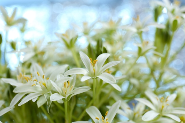 美しい春の野の花