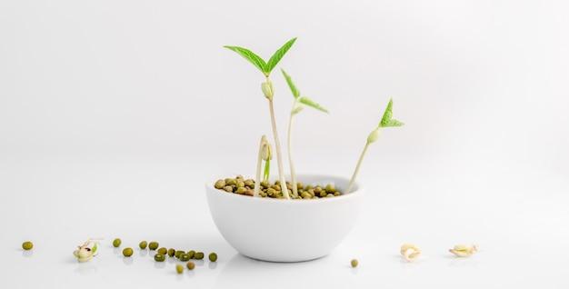 Красивые ростки месиво микрозелени, растущие из семян в белой миске, изолированные на белом фоне