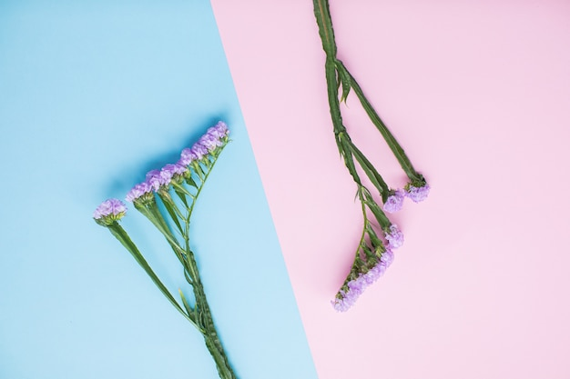 Красивая статика на разноцветных бумажных фонах с копией пространства. весна, лето, цветы, цветовая концепция. доставка цветов