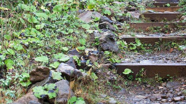 많은 녹색 식물이있는 산속의 숲에서 계단 형태의 아름다운 돌 길