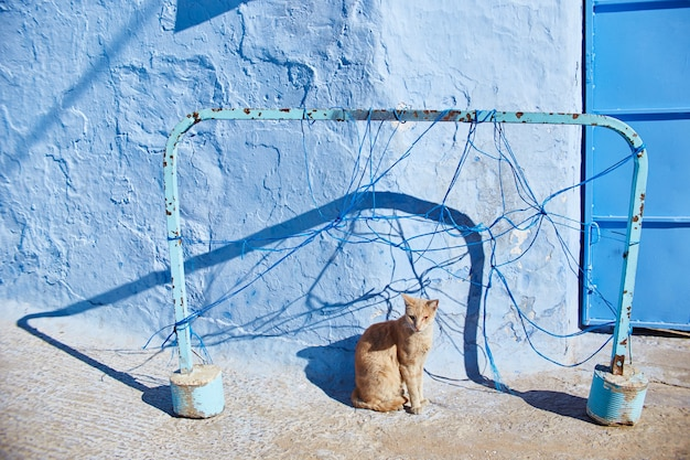 Beautiful stray cats sleep and walk in the streets of morocco. beautiful fairy-tale streets of morocco and cats living on them. lonely homeless cats