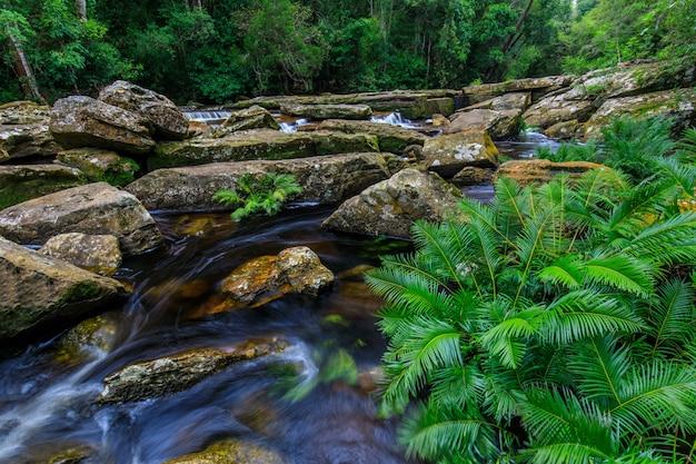 Beautiful  stream in the rainforest.
