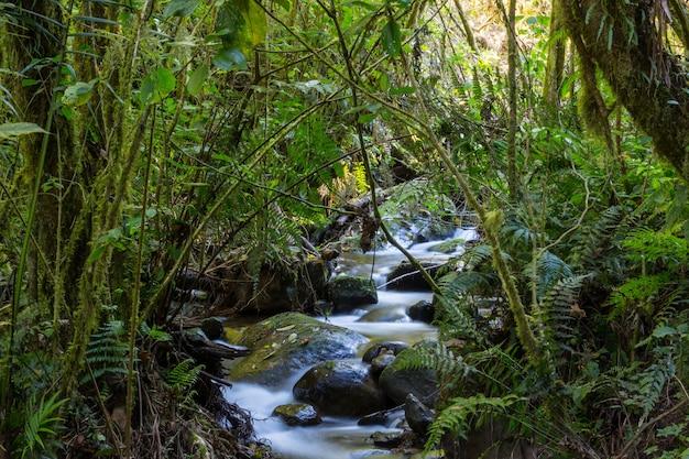 열대 우림에서 아래로 흐르는 아름다운 스트림 물. 코스타리카, 중앙 아메리카