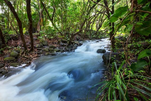 Красивый ручей, стекающий в тропический лес. коста-рика, центральная америка