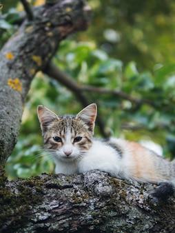 Beautiful street small cat portrait