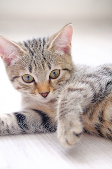 Beautiful striped cute sad pensive grey kitten.