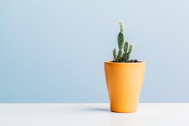 Beautiful succulent on blue background.
