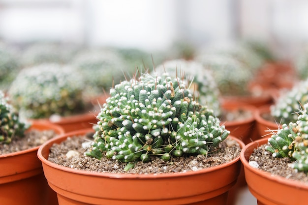 Beautiful succulent plant in greenhouse