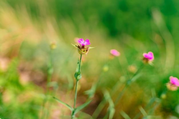 Красивый летний фон с полевыми цветами
