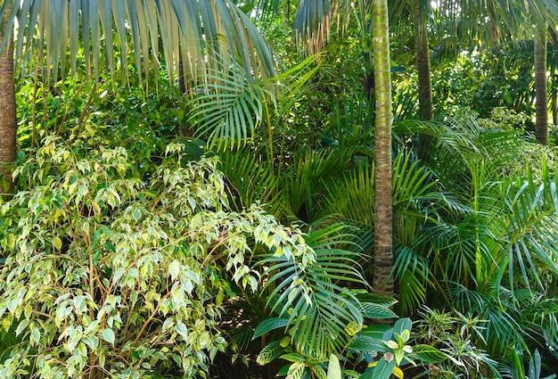 Красивая летняя городская парковая роща с субтропическими растениями