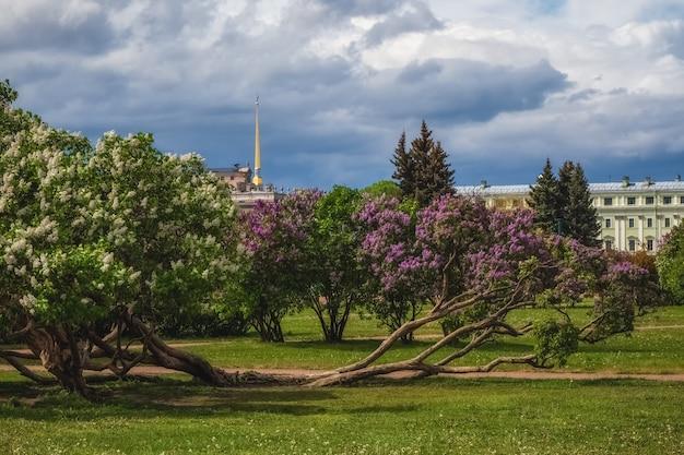 ライラックが咲くと美しい夏の街並み。