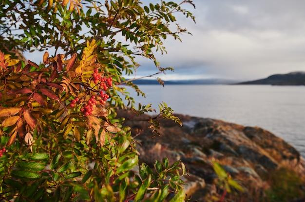 Красивый ландшафт летнего дня покинул береговую оборону северное teriberka artnature, вид на море barents.