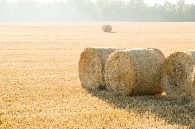 Beautiful summer farm scenery with haystacks. agriculture concept.