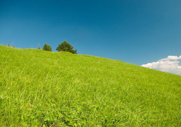 아름다운 여름 풍경 아름다운 녹색 초원