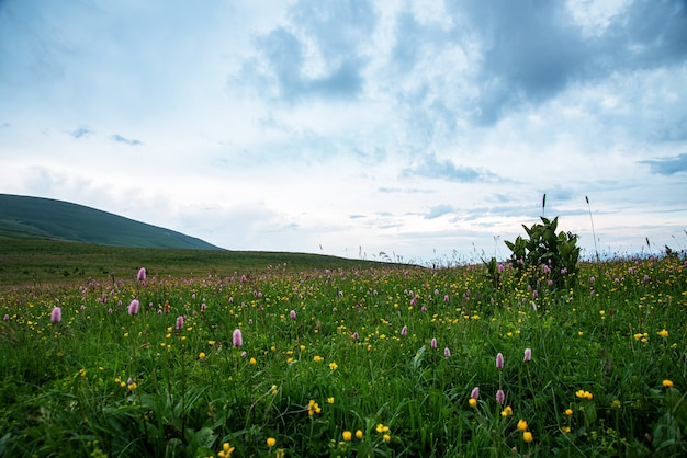 Beautiful summer landscape on a cloudy day in a mountain valley with a flower meadow