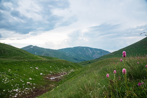 Beautiful summer landscape on a cloudy day in a mountain valley with flowers. russia, adygea