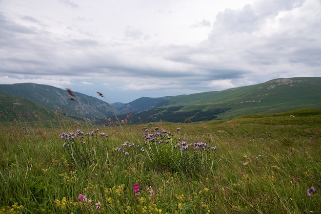 Beautiful summer landscape on a cloudy day in the mountains with flowers