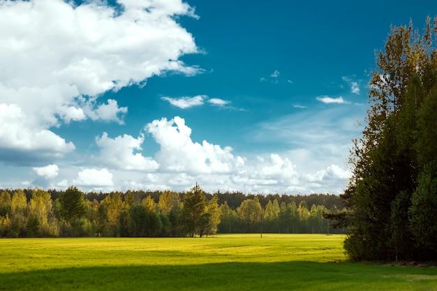 Красивый летний пейзаж зеленый лес поля и голубое небо.