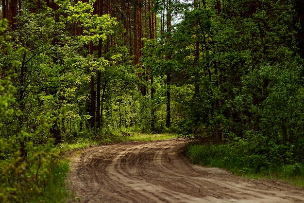 Beautiful summer landscape green forest and road in the forest.