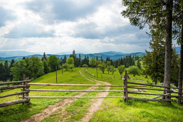 Beautiful summer landscape of a green meadow on a hill overlooking a dense coniferous forest
