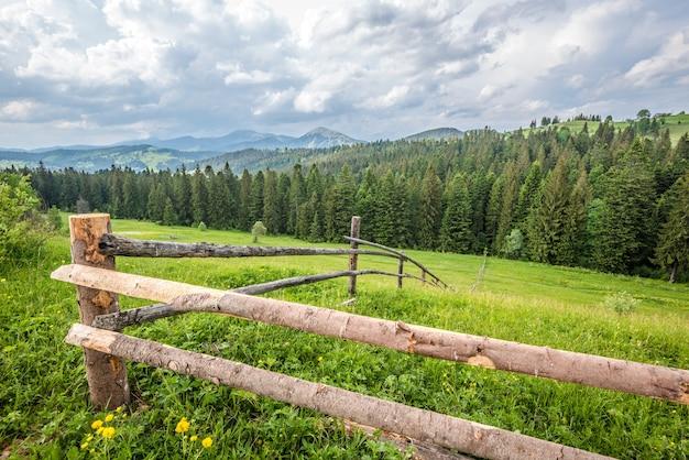 針葉樹林を見下ろす丘の上の緑の牧草地の美しい夏の風景