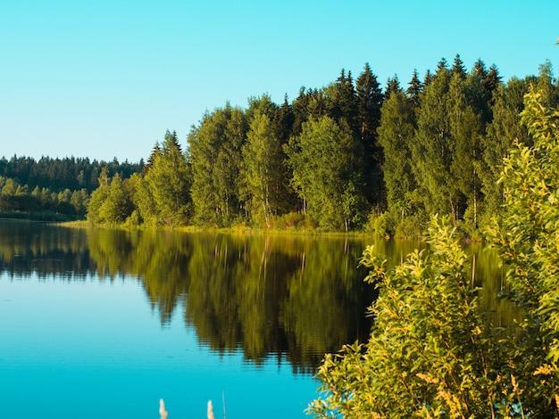 맑은 숲 호수의 아름다운 여름 풍경