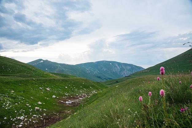花の咲く山の谷の曇りの日の美しい夏の風景。ロシア、アディゲ