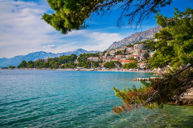 Красивый летний пейзаж через сосны с адриатическим морем и береговой линией в бреле, макарская ривьера, хорватия