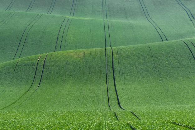 푸른 언덕으로 아름다운 여름 풍경