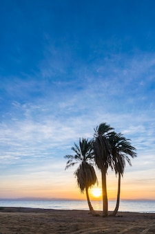 Beautiful summer landscape with palms on the beach at sunrise