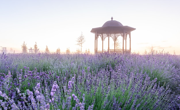 Beautiful summer plot. wonderful lavender field at dawn. decorative lamps and a wrought-iron gazebo adorn the magical summer morning landscape.