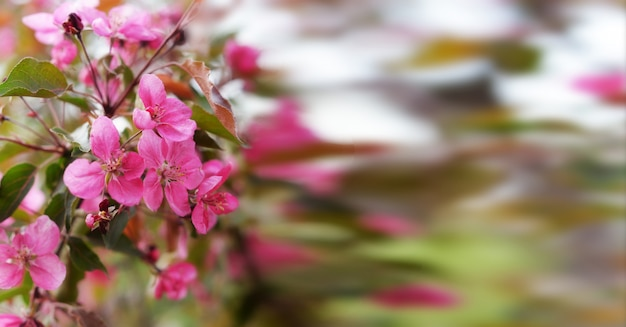 Beautiful summer spring background of pink flowers