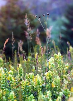 Красивый летний закат полевые цветы на горной поляне возле леса