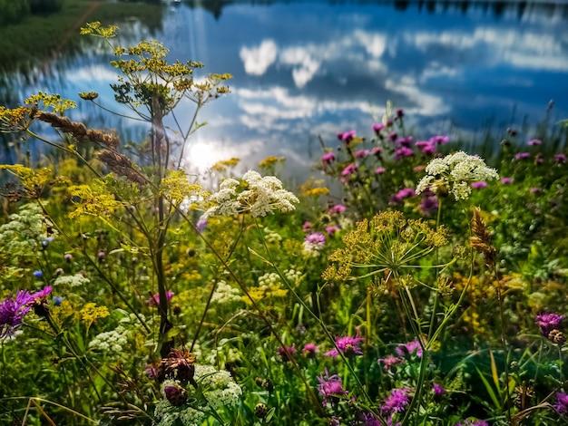 Красивые летние полевые цветы озера, в котором отражается небо и яркое солнце летний день