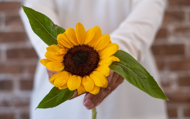 Beautiful sunflower in hand of a senior woman - brick wall background