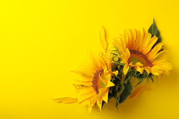 Beautiful sunflower, space for text