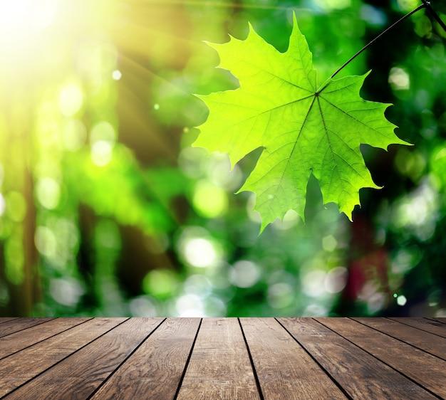 木の板の床と秋の森の美しい日光