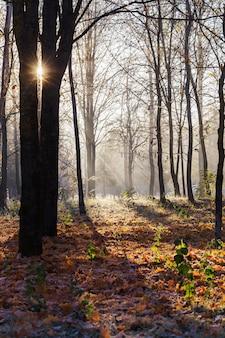 Красивый солнечный осенний пейзаж с морозом