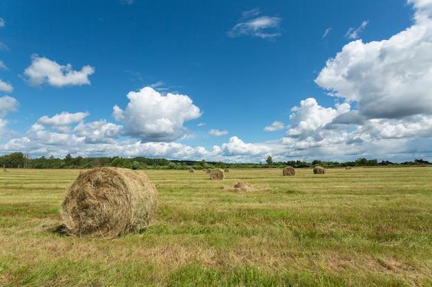 干し草のスタックを持つ美しい日当たりの良い緑の牧草地。