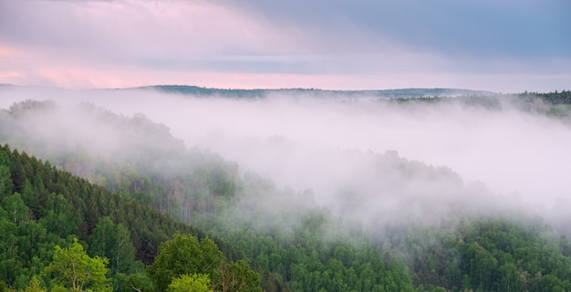 Beautiful sunrise in the forest with heavy fog. view from height