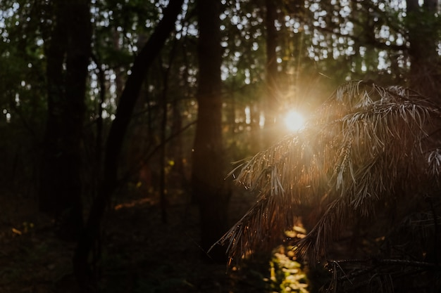 秋の森の美しい日の出