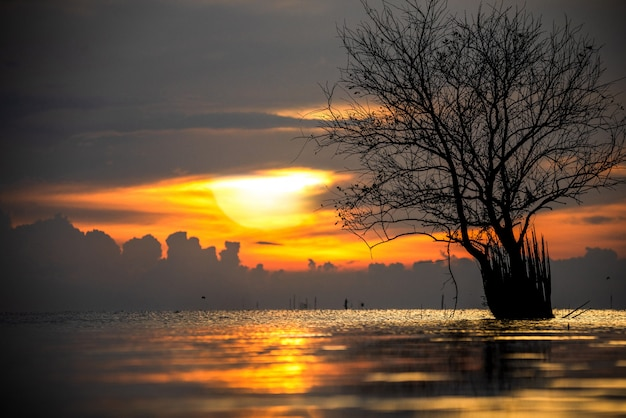 Beautiful sunrise on a lake with a tree
